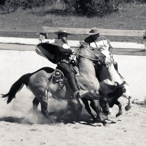 Chaiten rodeo
