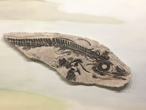 Trelew Paleontology Museum